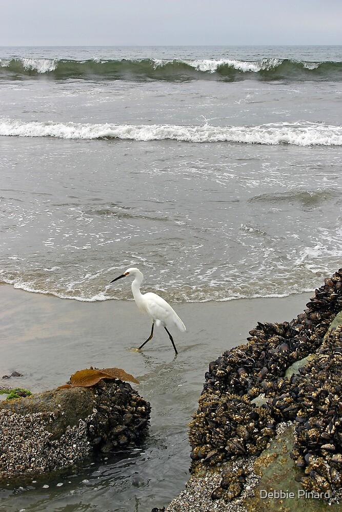 Going for a Walk on the Beach - San Diego California by Debbie Pinard