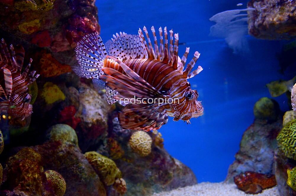 Scorpionfish by redscorpion