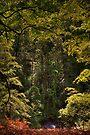 Birks of Aberfeldy (1) by Karl Williams