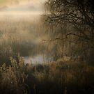 Bush and Reeds  by David  Preston