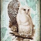 Owls In Love by Debbie-Anne Parent