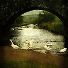 Geese in the rain at Two Bridges by moor2sea