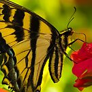 A Butterfly World by David Friederich