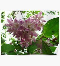 True blossoms Poster
