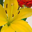 Yellow Lily by Imagery