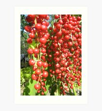 Nth Queensland berries Art Print