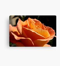 Apricot Beauty Rose 2 Canvas Print