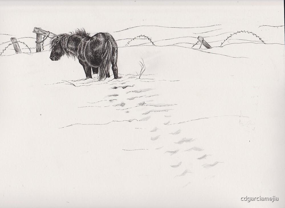 shetland pony in snow by cdgarciamejia