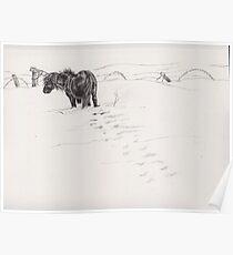 shetland pony in snow Poster
