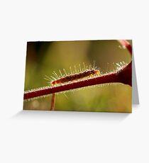 Pins & Needles Greeting Card