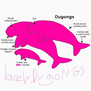 pink dugongs by loc123