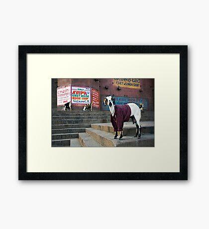 Woolly Jumper Framed Print