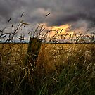 Willamette Valley Harvest Time by Charles & Patricia   Harkins ~ Picture Oregon