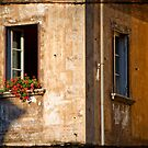 Window with geraniums by Silvia Ganora