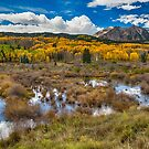 Rocky Mountain Kebler Autumn Rush by Bo Insogna