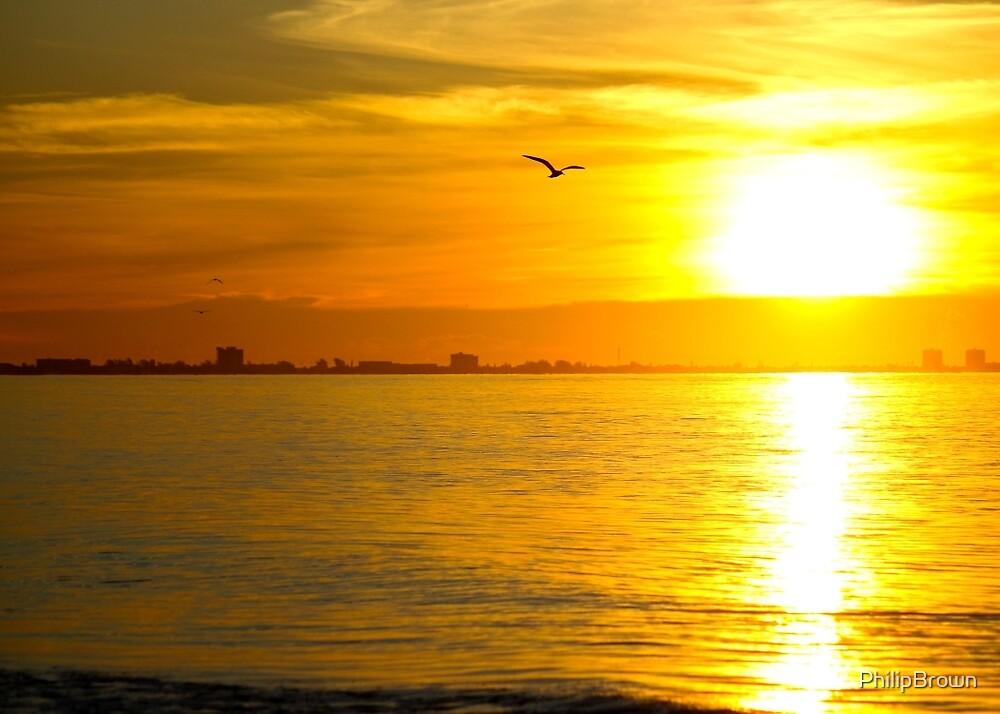 Sunrise Flight by PhilipBrown
