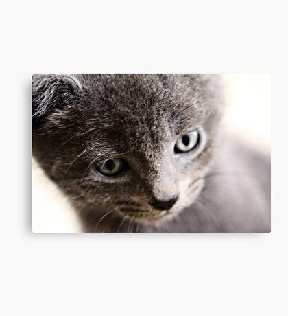 Kitten V Canvas Print