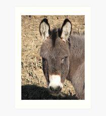 Donkey II Art Print