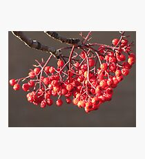Sun Kissed Berries Photographic Print