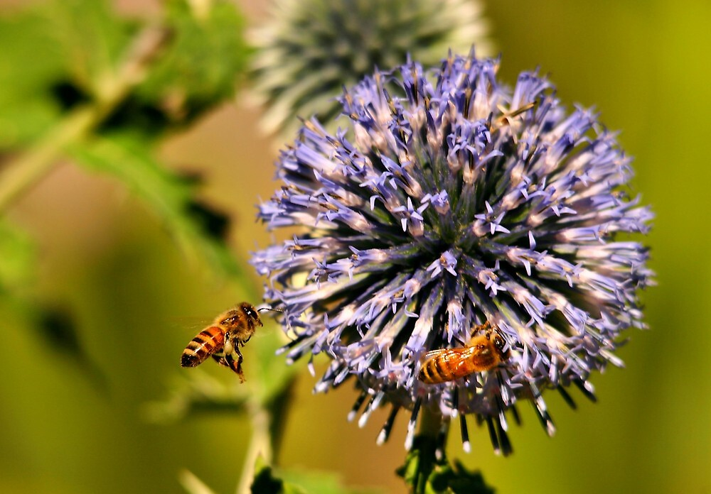 Busy Bees by Xcarguy