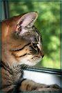 Watching Squirrel Pals by jodi payne