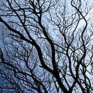 Twisted branches of trees by Shiju Sugunan