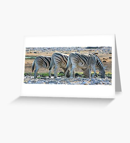 Zebra Lineup  Greeting Card