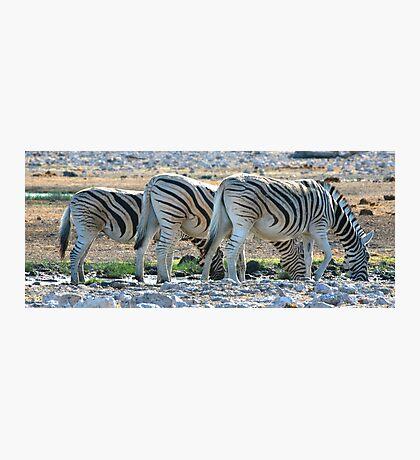 Zebra Lineup  Photographic Print