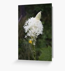 Indian Basket Grass Greeting Card