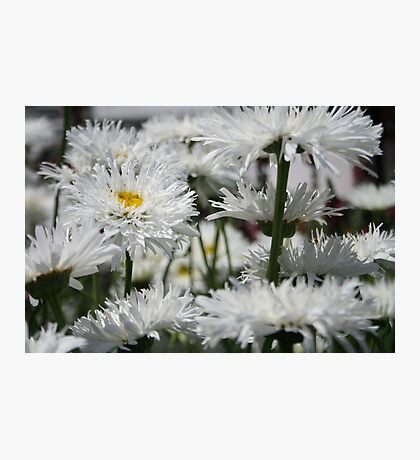 It's a nice day for a white weeding... Photographic Print