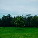 Green tree by Inese