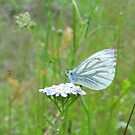 Tiny White by ienemien