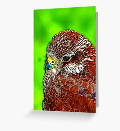 Kestral Greeting Card