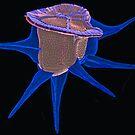 Ceratocorys - Bleu  by BlueOcean