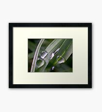 Super Macro Water Drops Framed Print
