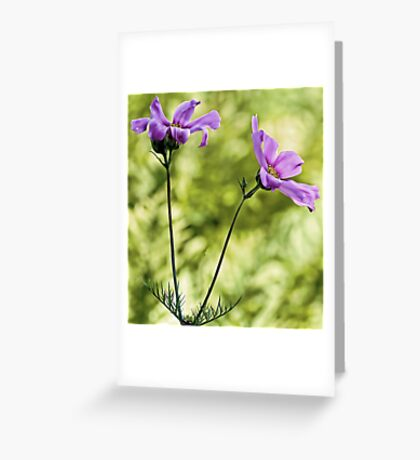 Pink Cosmos - Among The Wood Fern Greeting Card
