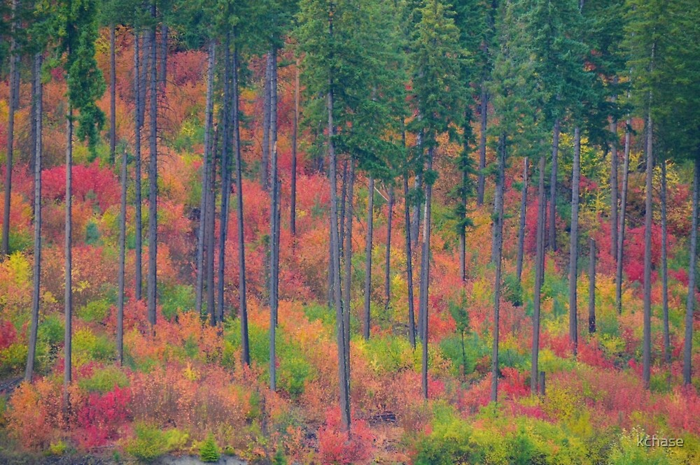 Fall in the Cascades by kchase
