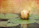 Peach Blush by KBritt
