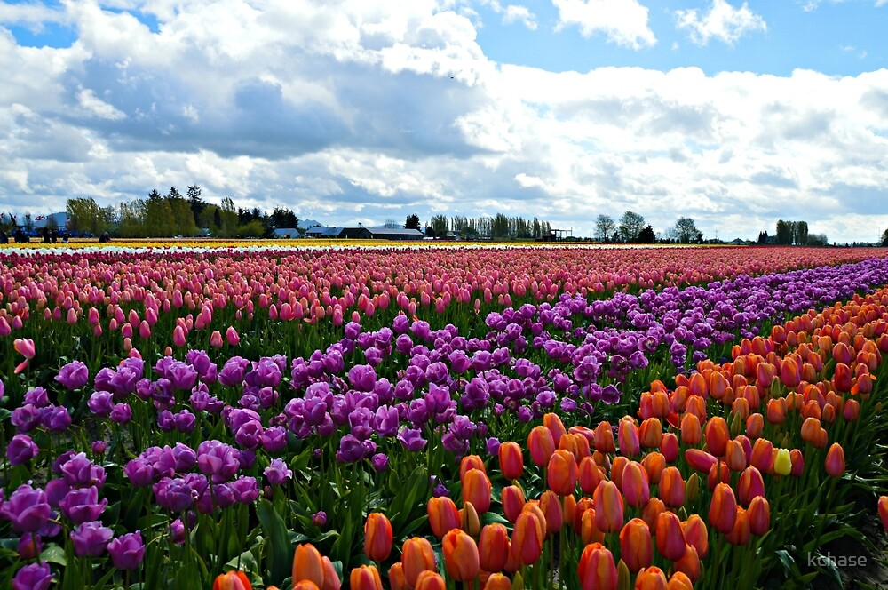 Tulips for Days by kchase
