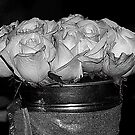 A Bucket Of Rose by saseoche