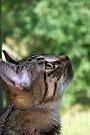 Tasha's Profile by jodi payne