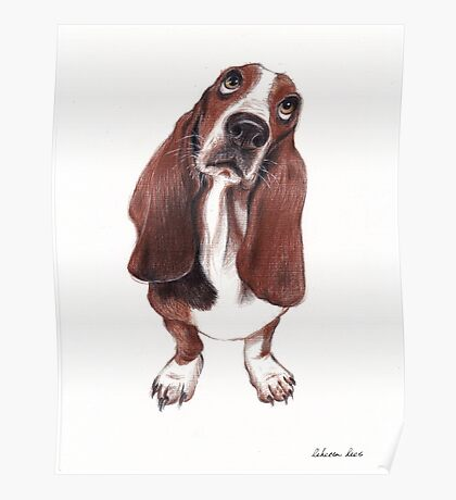 Beautiful Basset Hound Looking for a Forever Home Poster