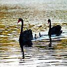 Swan Family by Odille Esmonde-Morgan