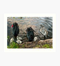 Swan Family #2 Art Print