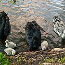 Swan Family #2 by Odille Esmonde-Morgan
