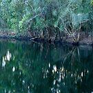 Wetlands Habitat with Sacred Kingfisher by Odille Esmonde-Morgan