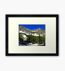 Conifer trees Framed Print