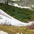 Mountain flowers by zumi