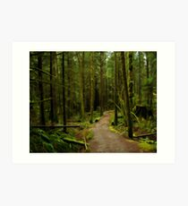Rainy Forest on the East Canyon Trail Art Print