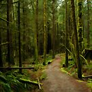 Rainy Forest on the East Canyon Trail by Michael Garson